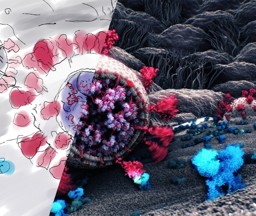 The image shows a process of converting a scientific sketch into a 3D molecular visualization. We see a virion of SARS-CoV-2 whose spike protein has just attached to an ACE-2 receptor of a epithelial cell. Winning entry by Tatjana Hirschmugl, Tobias Klein, Ondřej Strnad, Deng Luo, Ivan Viola, and Peter Mindek.